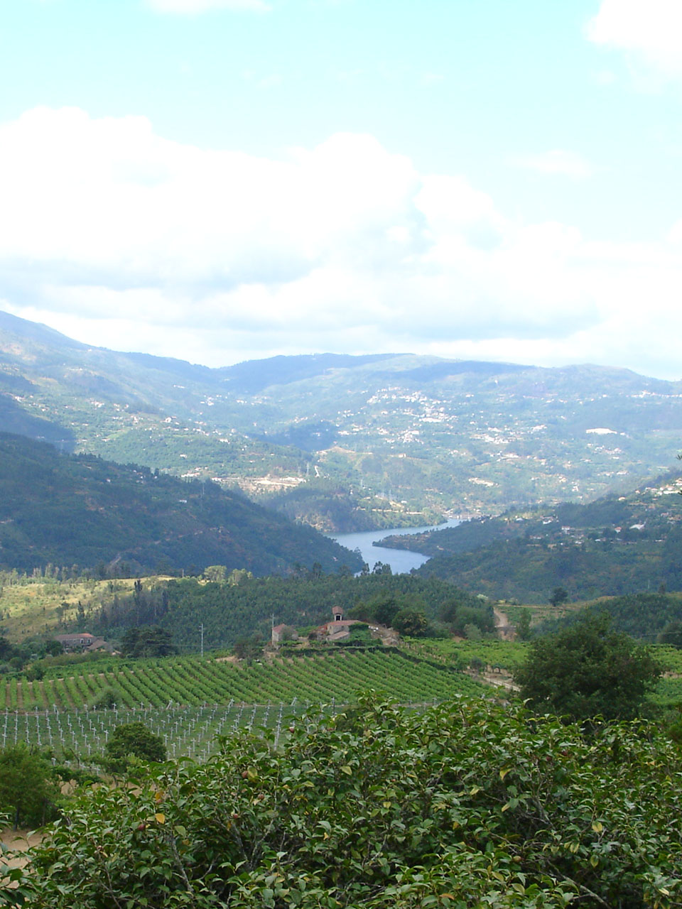 The Vinho Verde Region
